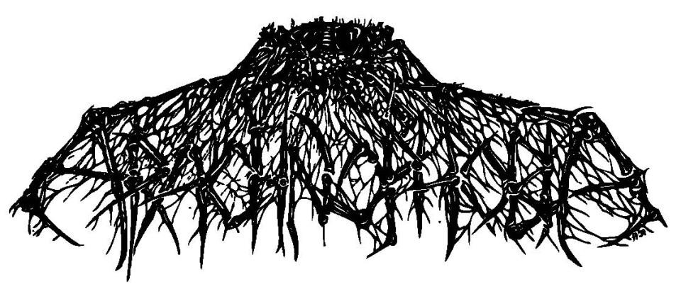 Arachophobia_logo